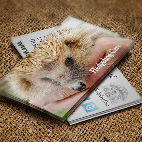 Web Design UK Business Printing Hedgehog Care Business Cards
